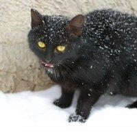Снегопад, снегопад, не мети мне на шубку... :: Андрей Заломленков