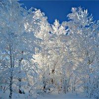 Зимняя сказка :: Leonid Rutov