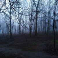 Новогодний туман :: Виктор Кушнир