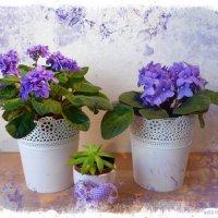 Фиалок цвет :: Nina Yudicheva