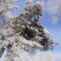 Замёрзшие лапы :: Наталия Григорьева