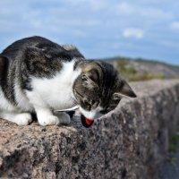 Сидела кошка на заборе в далеком шведском городке..... :: Татьяна Ларионова