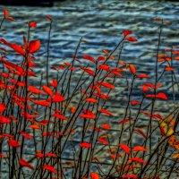 Красные листья :: Алексей Виноградов