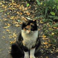 Кошка :: Vit