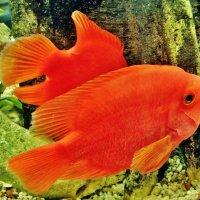 В аквариуме :: Aida10