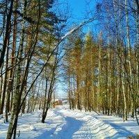 снежная дорога :: Владимир