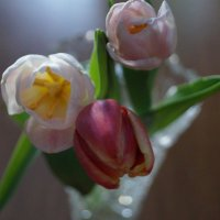 Немного цветов :: Елена Елена