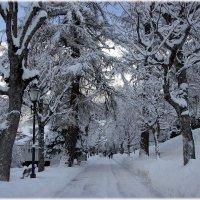 Снегопад как в сказке :: ZNatasha -