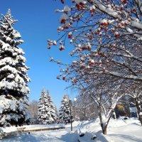 Чудесный зимний денёк :: Надежда