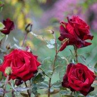 Осеннее цветение :: kentiya