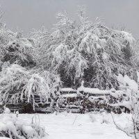 Снег... :: Елена Васильева