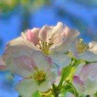 Весна :: Olcen Len
