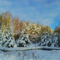снежные деревья :: Владимир
