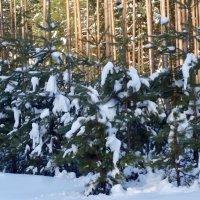 Как красив зимний лес! :: Натала ***