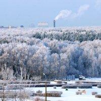 Зима в Битце, Москва :: Генрих