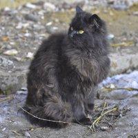 Кто здесь черный кот ... ? :: Ольга Винницкая (Olenka)