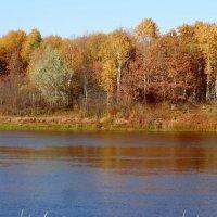 Краски осени на берегу реки :: Натала ***