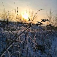 Морозный вечер :: Дарья Тищенко