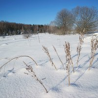Февральское утро в долине Протвы :: Сергей Курников