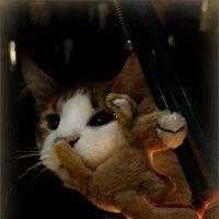 Портрет очень загадочного Кота :: Кай-8 (Ярослав) Забелин