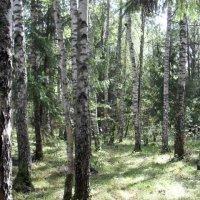 Мой лес :: Надежда