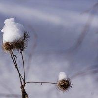 Зимний этюд :: Наталия Григорьева