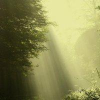 Найди свой путь ! :: Heinz Thorns