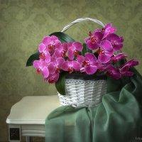 Зимняя корзина с орхидеями :: Ирина Приходько