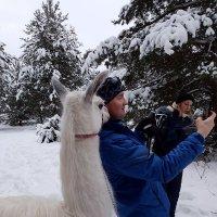 Селфи с блондинкой на фоне зимы... :: Ольга Русанова (olg-rusanowa2010)