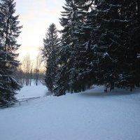 Павловский парк. Январь :: Наталья Герасимова