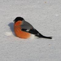 По свежему снежку :: Светлана Медведева