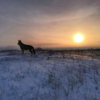 Зимний закат :: Дарья Тищенко