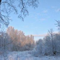 Природа в январе... :: ТАТЬЯНА (tatik)