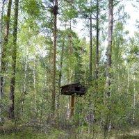 У леса на опушке... :: Ольга