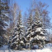 Солнечный морозный день :: Наиля