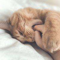 Опять про моего кота :: Евгения К