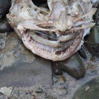 Зубастый был рыб! :: Natalia Harries