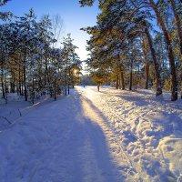 Зимний солнечный денек :: Виктор