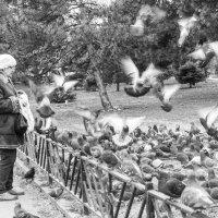 Городские птицы :: Ирина Комолова
