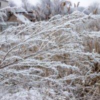 Морозным утром февраля :: Denis Aksenov