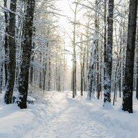 Зимнее солнце :: Nika Polskaya