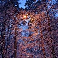 Когда упал на землю снег – был вечер... :: Ольга Русанова (olg-rusanowa2010)