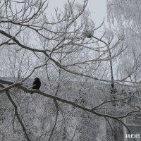 Зима :: IRENE N (miss.nickolaeva)