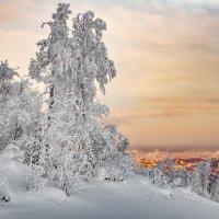 Зимние контрасты :: vladimir Bormotov