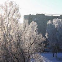 мороз :: Владимир Зеленцов