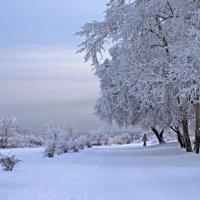 Зарисовка зимы :: Екатерина Торганская