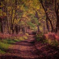 Осенней тропой. :: Георгий
