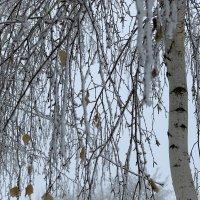 Совершенно зимнее настроение* :: Юлия Грозенко