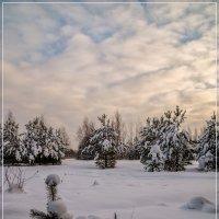 Зимний день 4 :: Андрей Дворников