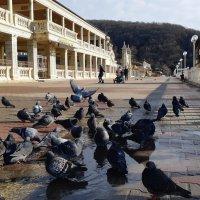 Голубиные купания в солнечный день :: Виктория Попова
